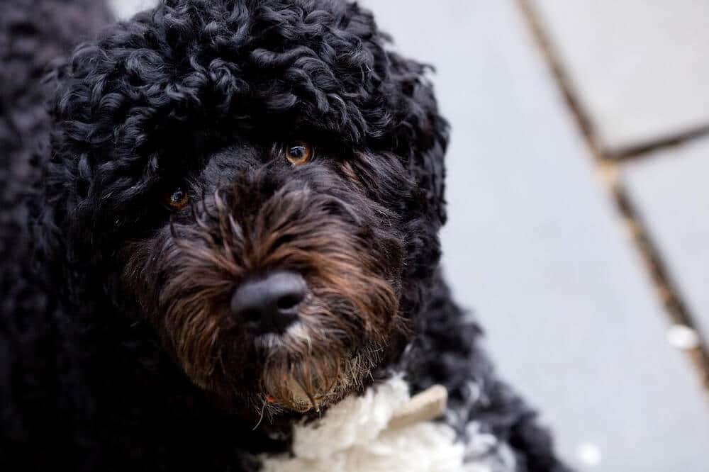 hund hunderassen für schwimmer wasser baden rasse badespaß see meer wasserhund