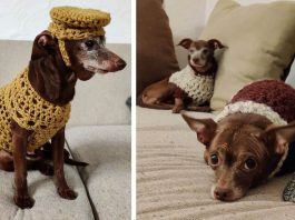 hund hundesenior häkeln outfit usa adoption happy end