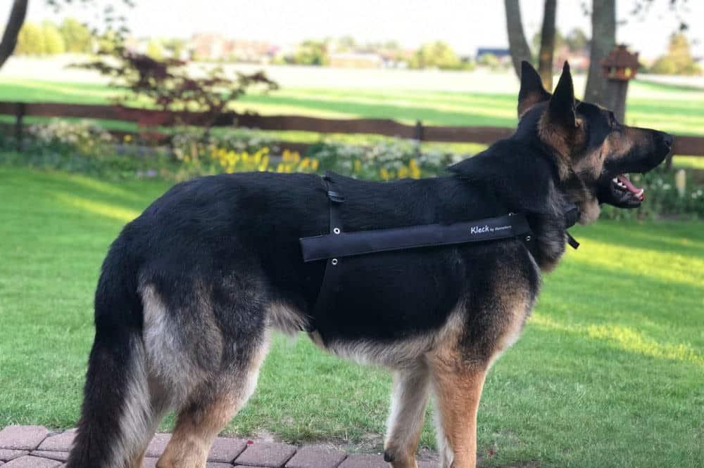 kleck leckschutz hennenberg schaefer hund stehend