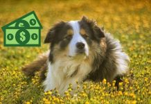 hund border collie 5 millionen erbe tod besitzer bill dorris