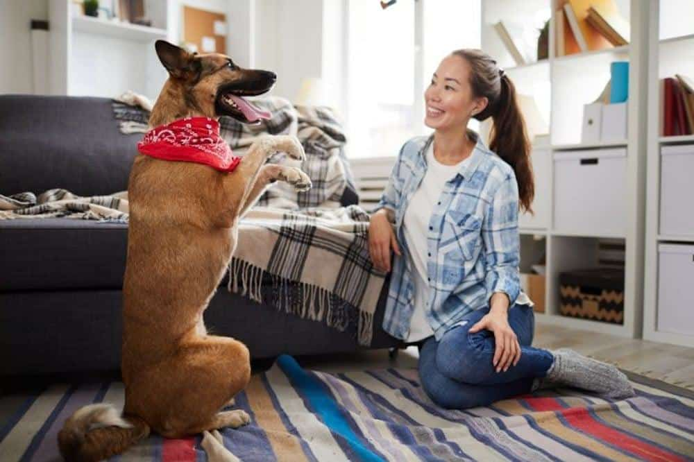 online hunde training zuhause schäfer frau boden