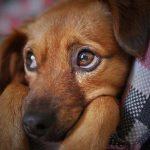hund passt nicht zu sofa tierheim battersea england