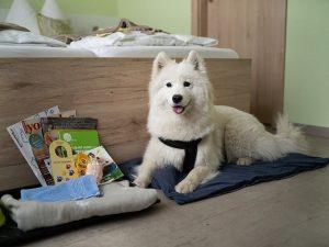 Weißer Hund sitzt vor einem Bett und vor ihm sind verschieden Leckerlis ausgebreitet