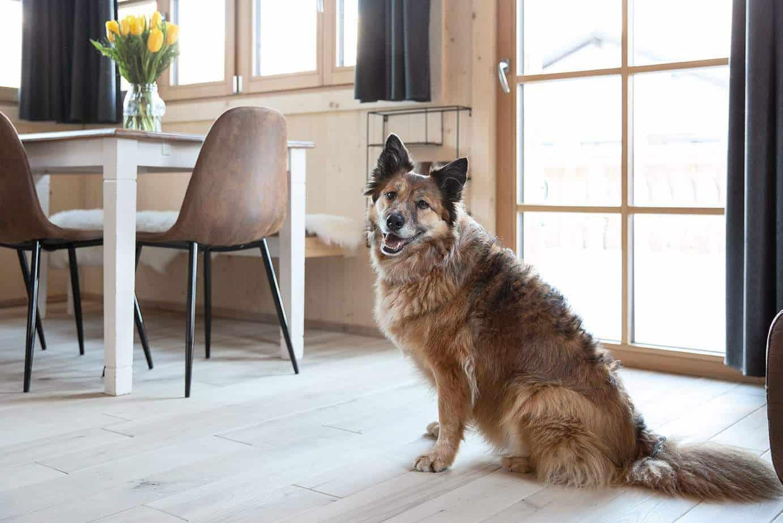 Ein großer hellbrauner Hund sitzt vor einer Glastür.
