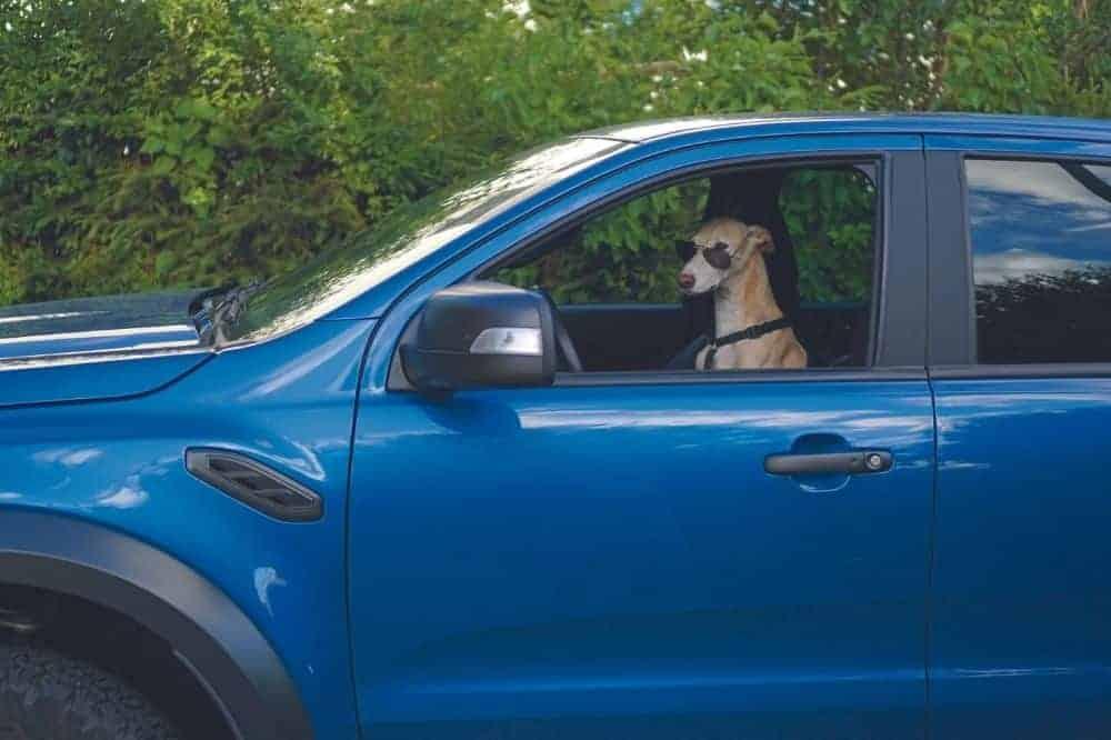 Das blaue Auto steht und am Fahrersitz sitz ein Hund mit Sonnebrille.