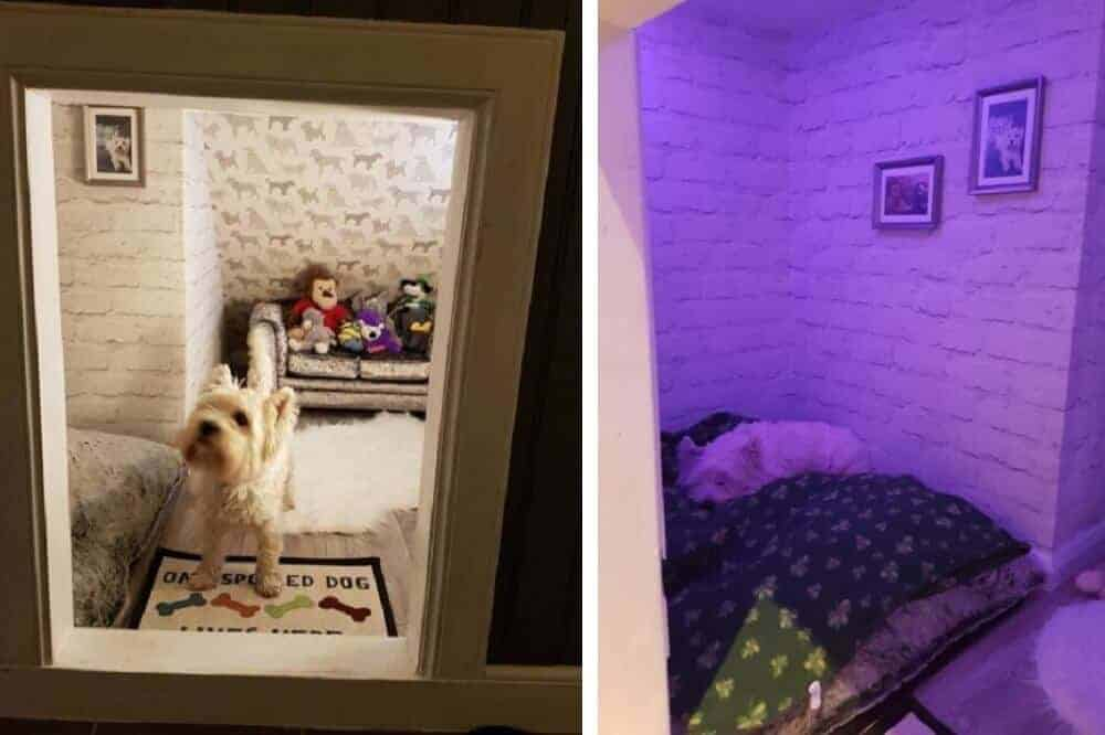 Links steht Molly im Eingang zu ihrem Zimmer, rechts liegt sie bei violettem Licht auf ihrem Hundebett.