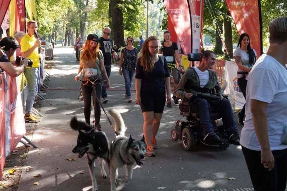 Huskys, Rollstuhlfahrer und andere Leute nehmen am Inklusionslauf teil.