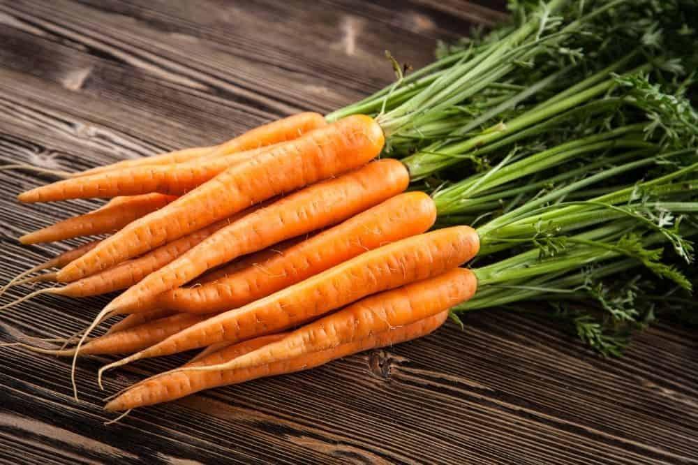 Frische Karotten, mit Grün. Morosche Karottensuppe für den Hund.