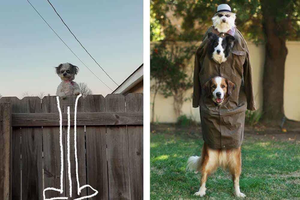 Links ist der Hund mit langen Beinen gezeichnet, rechts sind drei Hunde unter einem Mantel und mit einem Hut auf dem Kopf zu sehen.