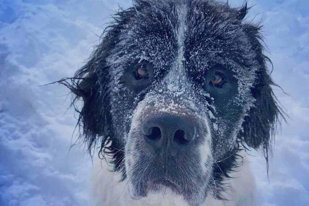 Maggie mit von Schnee bedecktem Gesicht.