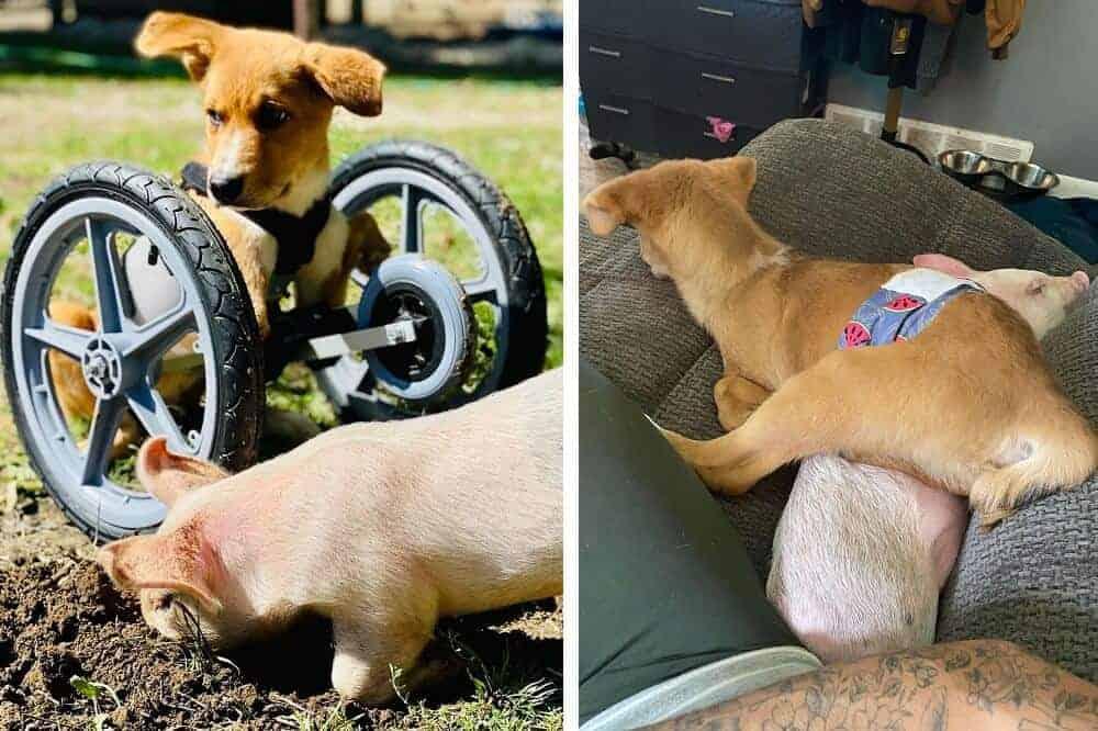 Links ist Winnie in seinem Rollstuhl zusammen mit Wilma im Freien zu sehen, rechts kuscheln die beiden auf dem Sofa.
